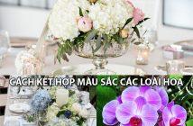 Bỏ túi ngay 3 cách kết hợp màu sắc các loài hoa văn phòng