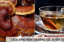 Cách uống nấm lim xanh rừng tốt, đối tượng nào nên dùng